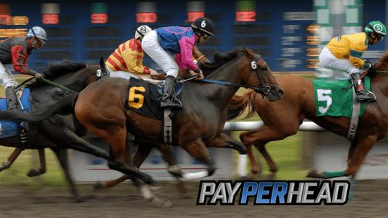 Horse Betting 101