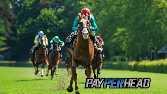 Horse Betting 101 - Online Racebook Tools
