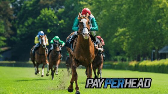 Horse Betting 101 - Online Racebook Tools